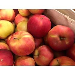 Pommes Idared, le sac de 3 kg